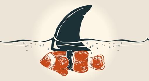 Clownfish-Shark-Fin